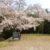 ちょっと寄り道・・・(伊坂ダムに咲く平成最後の桜)