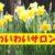 第68回わいわいサロン開催(平成31年4月24日)