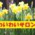 第71回わいわいサロン開催(令和元年5月22日)